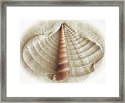 Shell In The Sand Framed Print