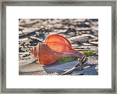 Shell In The Sun Framed Print by Mike Covington