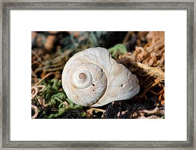 Shell Net 1 Framed Print