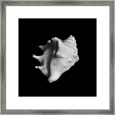 Shell No. 2 Framed Print