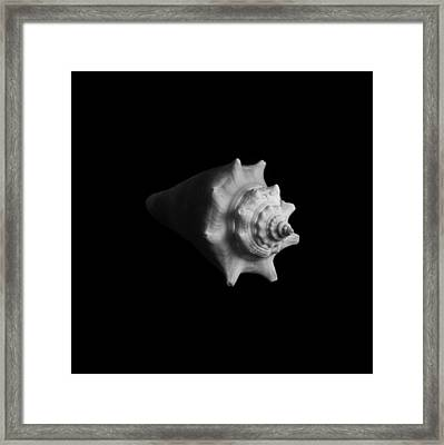 Shell No. 4 Framed Print