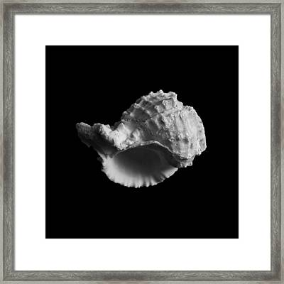 Shell No.3 Framed Print