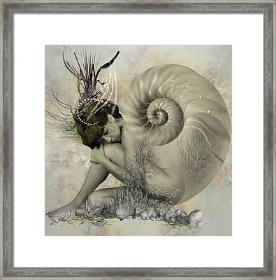 Shell Of Life  Framed Print