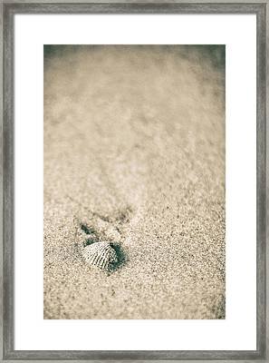 Framed Print featuring the photograph Shell On Beach Alabama  by John McGraw
