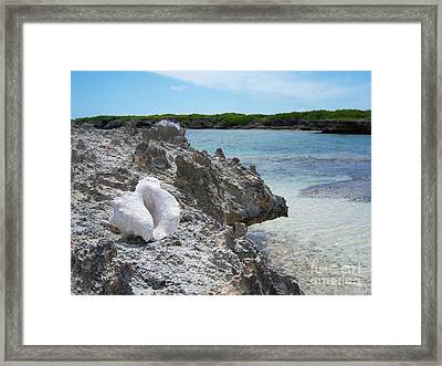 Shell On Dominican Shore Framed Print