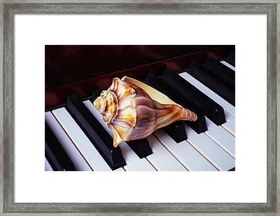 Shell On Piano Keys Framed Print by Garry Gay