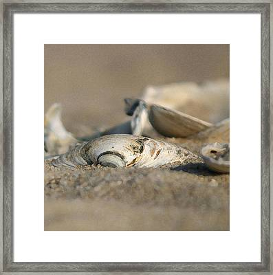 Shell Pile Framed Print by Mary Haber