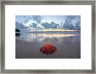 Shell Rise Framed Print