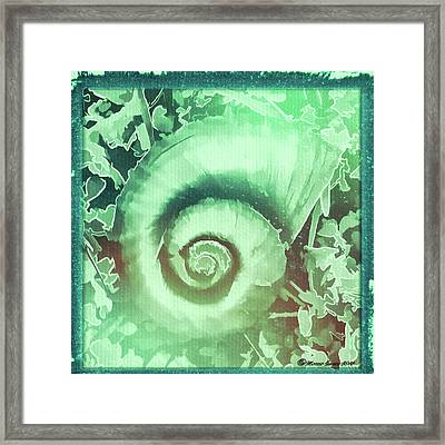 Shell Series 2 Framed Print by Marvin Spates