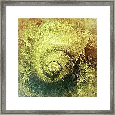 Shell Series 4 Framed Print by Marvin Spates