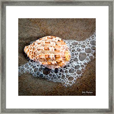 Shell Series No. 4 Framed Print