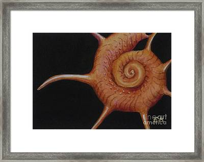 Shell Study II-g Yoka Framed Print by Edoen Kang