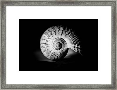 Shell Study No. 001 Framed Print
