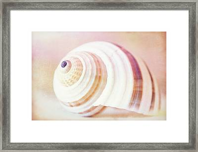 Shell Study No. 02 Framed Print