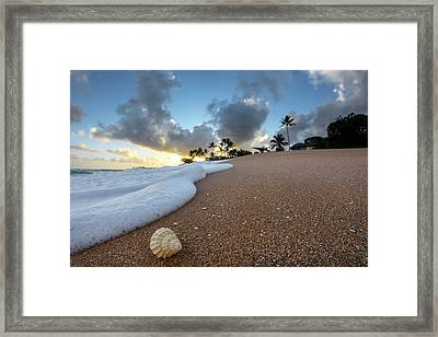 Shell Surprise Framed Print by Sean Davey