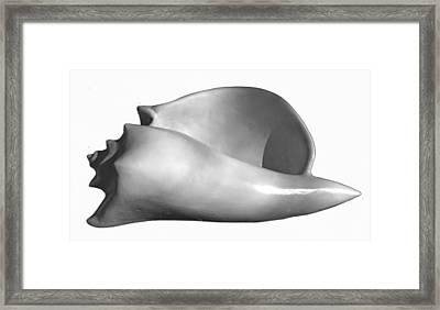 Shell Three Framed Print