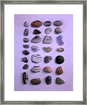 Sea Shell Treasures #1 Framed Print