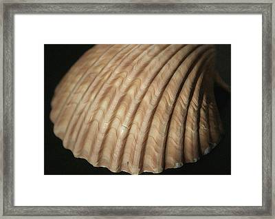 Shell Waves Framed Print by Mary Haber
