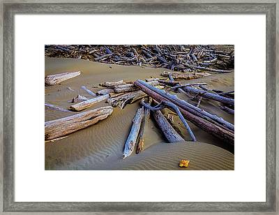 Shell With Driftwood Framed Print