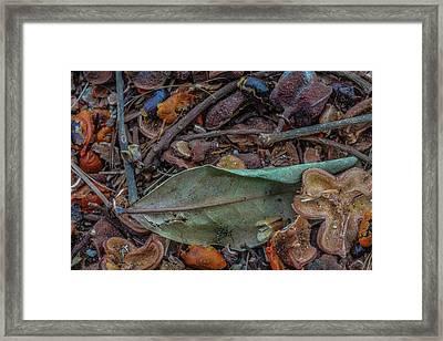 Shelled Seeds In Life Believe Framed Print