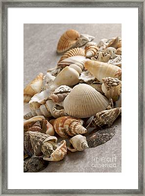 Shellfish Shells Framed Print by Bernard Jaubert