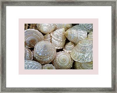 Shells - 4 Framed Print by Carla Parris