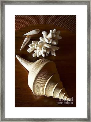 Shells And Coral Framed Print