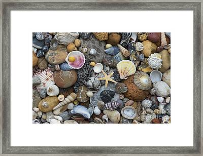 Shells And Pebbles Framed Print