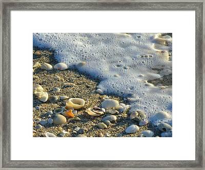 Shells And Seafoam Framed Print