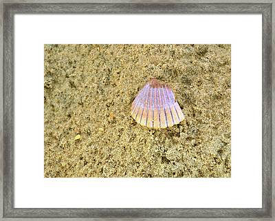 Shells And Stones Framed Print by JAMART Photography