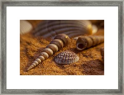Shells Framed Print by Anthony Towers