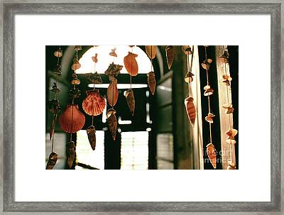 Shells At The Old Customs Building Framed Print