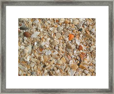 Shells  Framed Print by Eliot LeBow