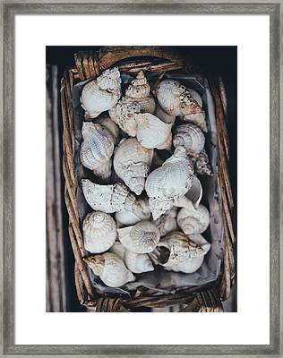 Shells Framed Print by Happy Home Artistry