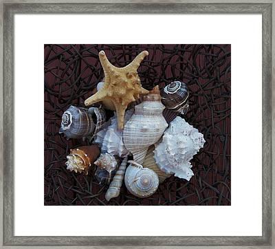 Shells In A Basket Ll Framed Print by Marsha Heiken