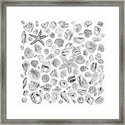 Shells Framed Print by John Keaton