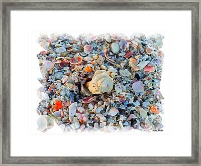 Shells Framed Print by Judy  Waller