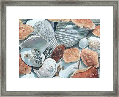 Shells Of The Puget Sound Framed Print
