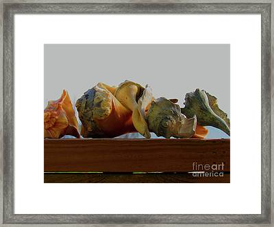 Shells Of The Sea In Orange And Gray Framed Print