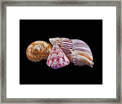 Framed Print featuring the photograph Shells On Black by Bill Barber