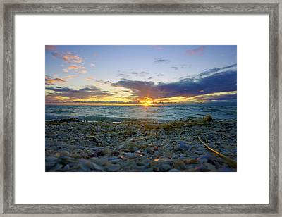 Shells On The Beach At Sunset Framed Print