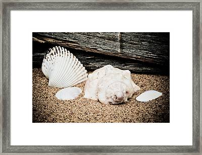 Shells On The Beach Framed Print by David Hahn