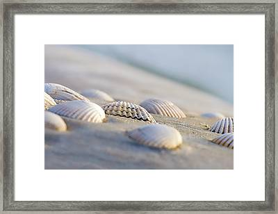 Shells  Framed Print by Peter Tellone
