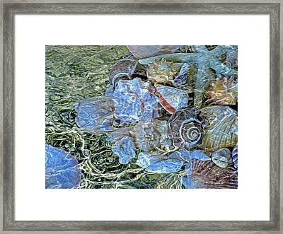 Shells Underwater 20 Framed Print by Lynda Lehmann