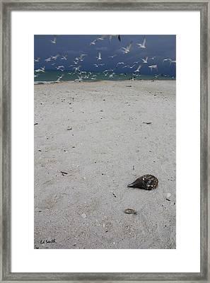 Shelly Framed Print