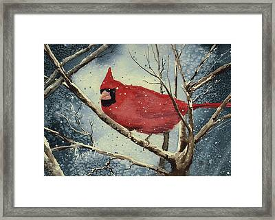 Shelly's Cardinal Framed Print