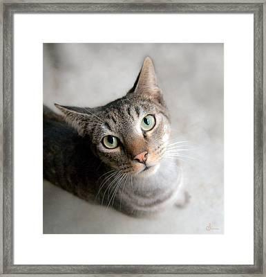 Shelter Cat Framed Print
