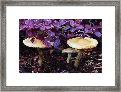 Shelter From The Rain Framed Print