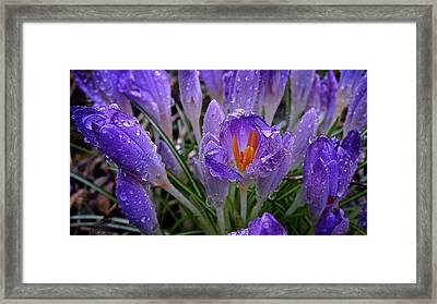 Shelter From The Storm 2016 Framed Print
