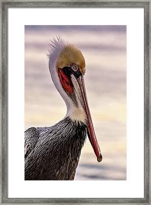 Shelter Island's Pelican Framed Print